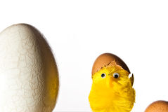 Easter egg and chicken Royalty Free Stock Image