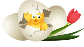 Easter egg chicken and tulip Royalty Free Stock Photos