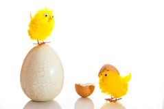 Easter egg and chickens Stock Photo