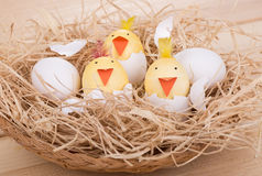 Easter Egg Chicks in a Basket Royalty Free Stock Photos