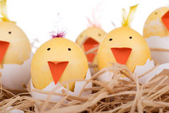 Easter Egg Chicks Closeup Stock Images
