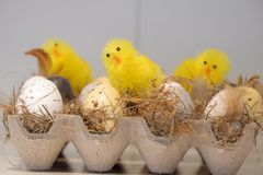 Easter egg and chicks stock photography