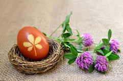 Easter egg colored naturally and red clover flowers Royalty Free Stock Photography