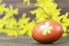 Easter egg colored with onion. Easter egg and yellow spring flowers. Easter egg colored with onion peel. Easter egg and yellow spring flowers stock images