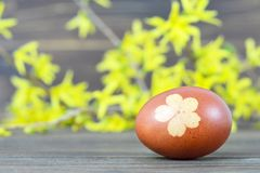 Easter egg colored with onion. Easter egg and spring flowers. Easter egg colored with onion. Easter egg and yellow spring flowers stock images