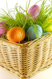 Easter egg. Coloured easter egg in the grass on white background royalty free stock photography