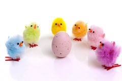 Easter egg with colourful chicks around Royalty Free Stock Photo
