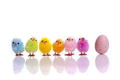Easter egg with colourful chicks next to it Stock Photo