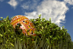 Easter egg on cress Royalty Free Stock Photography