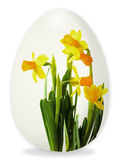 Easter egg with daffodils Stock Images