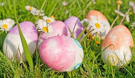 Easter egg and daisy Stock Images