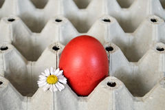 Easter egg and daisy in egg box Stock Images