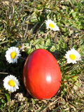 Easter egg and daisy Royalty Free Stock Images