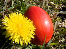 Easter egg and dandelion Stock Photography