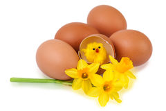Easter egg decoration with funny chick Royalty Free Stock Photography