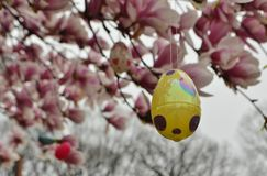 Easter Egg Decoration Hanging on Cherry Blossoms Tree in Spring Season stock photo