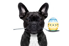 Easter egg  dog Stock Photos