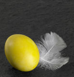 Easter egg and down feathers Royalty Free Stock Images