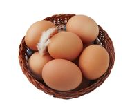 Easter egg and feather in basket Stock Image