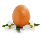 Easter egg with flowers of snowdrops Royalty Free Stock Photo