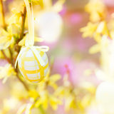 Easter egg on forsythia Stock Photography