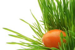 Easter egg with fresh grass Royalty Free Stock Photo