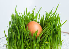 Easter egg in fresh green grass Royalty Free Stock Image