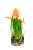 Easter egg on fresh green wheat grass Stock Images