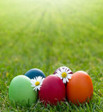 Easter egg in the fresh spring grass Royalty Free Stock Photography