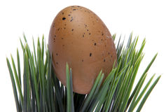 Easter Egg in Grass Royalty Free Stock Image