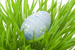 Easter egg in the grass. Easter egg hidden in the grass, studio shot Stock Photo