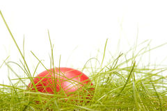 Easter egg in grass. Isolated on white background Royalty Free Stock Photography