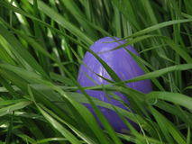 Easter Egg in Grass. Plastic Egg in Real Grass Stock Photos