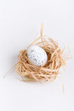 Easter egg in grass and nest. On white background Royalty Free Stock Images