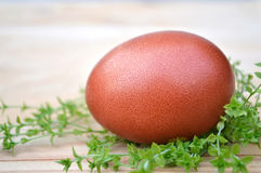 Easter egg and grass Royalty Free Stock Photography