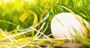 Easter egg with green grass Stock Photography