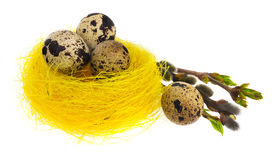 Easter egg hand painted in yellow bird`s nest with blooming twig Royalty Free Stock Image