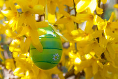 Easter egg hanging on a branch with yellow flowers Stock Image