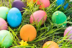 Easter egg ! happy colorful Easter sunday hunt holiday decorations Easter concept backgrounds with copy space Royalty Free Stock Photos