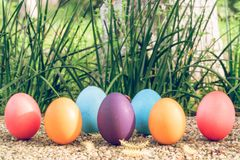 Easter egg ! happy colorful Easter sunday hunt holiday decorations Easter concept backgrounds with copy space. Gain & Noise filter applied Royalty Free Stock Photography