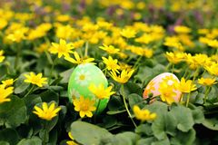Easter egg hidden in a flower meadow. Tradition hunting and searching for eggs royalty free stock images