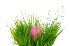 Easter egg hidden in grass royalty free stock photo