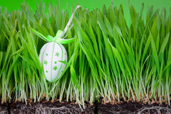 Easter egg hidden in grass Stock Photos