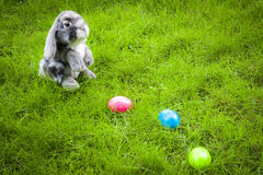 Easter egg hunt in a green field Royalty Free Stock Photography
