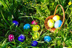 Easter egg hunt on green grass background Stock Image