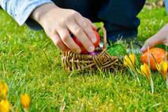 Easter egg Hunt on a Sunny Easter morning Royalty Free Stock Photography