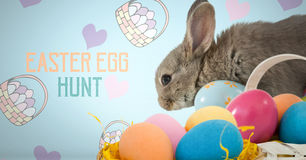Easter Egg Hunt text with Easter rabbit with eggs in front of pattern. Digital composite of Easter Egg Hunt text with Easter rabbit with eggs in front of pattern Stock Photography