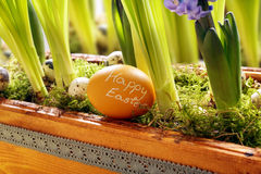 Easter egg with inscription happy easter in tray with flowers Royalty Free Stock Photo