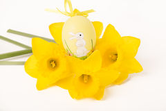 Easter egg in Jonquil primrose. Easter egg in spring flowers with background stock photo