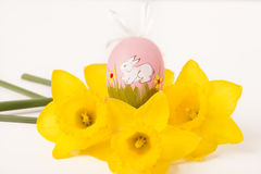Easter egg in Jonquil primrose. Easter egg in spring flowers with background stock photos